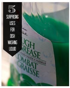 Dishwashing Liquid Can……Control Ants??!!!  Yes, and More!