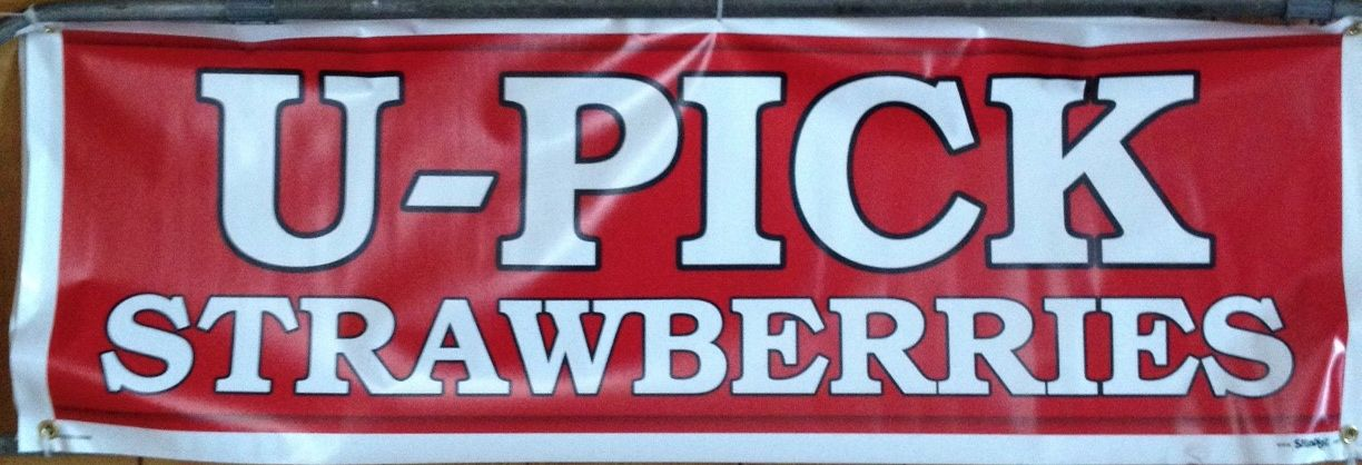 U-Pick Strawberry Fields Are OPEN!! Conventional Two Quarts for $1 And Organic $2.50 Per Pound!