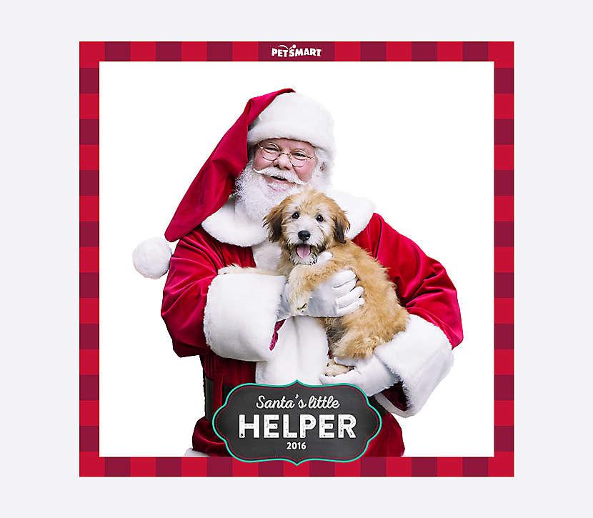 free petsmart photo with santa 12-6