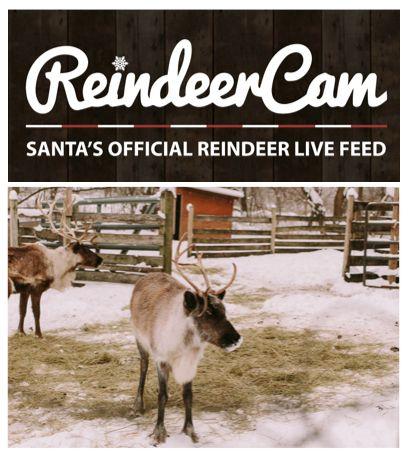 FREE Live Streaming of Santa's Reindeer Cam!