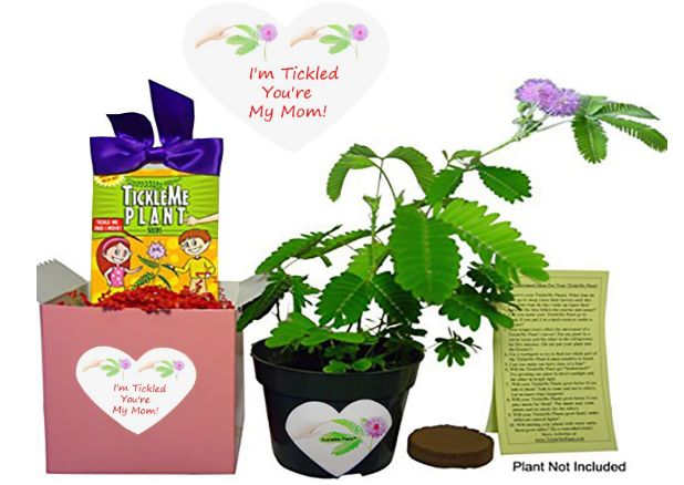 Tickle Me Plant Gift Box Set UNDER $20