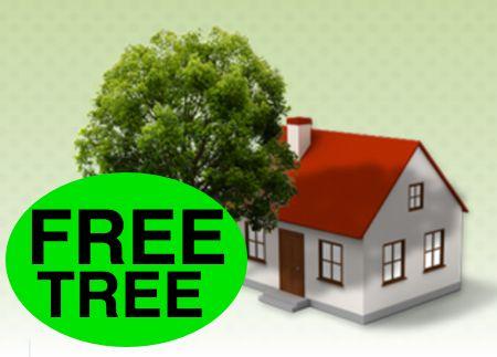 FREE Full-Size Tree!