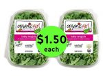 Nab OrganicGirl Salad Mixes ONLY $1.50 Each at Publix! ~ Right Now!