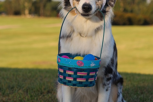 things to do on easter