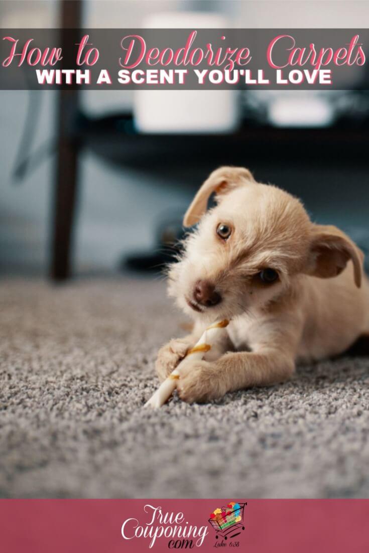 how to deodorize carpet