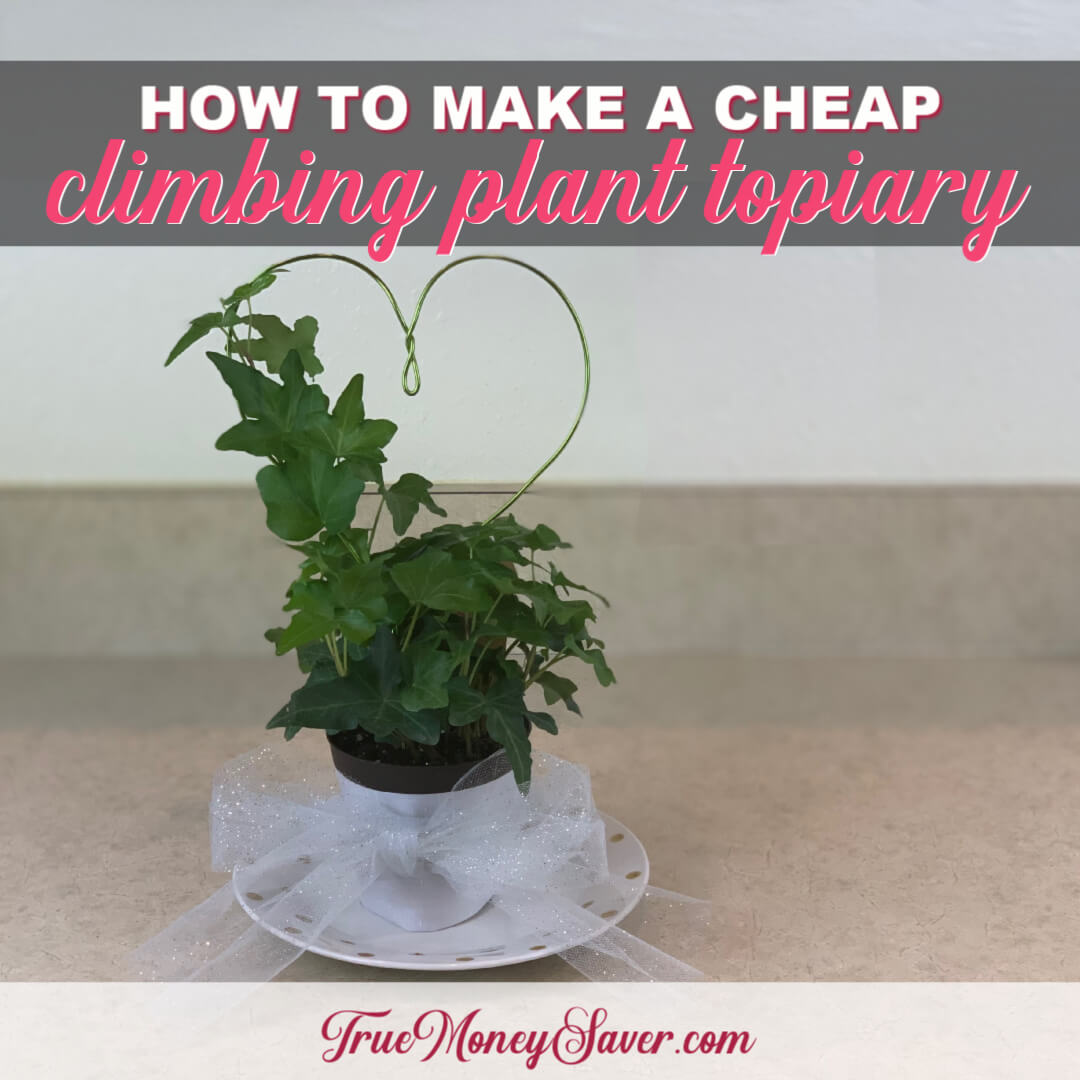 How To Make A Climbing Plant Into A Topiary Gift In Under 30 Minutes