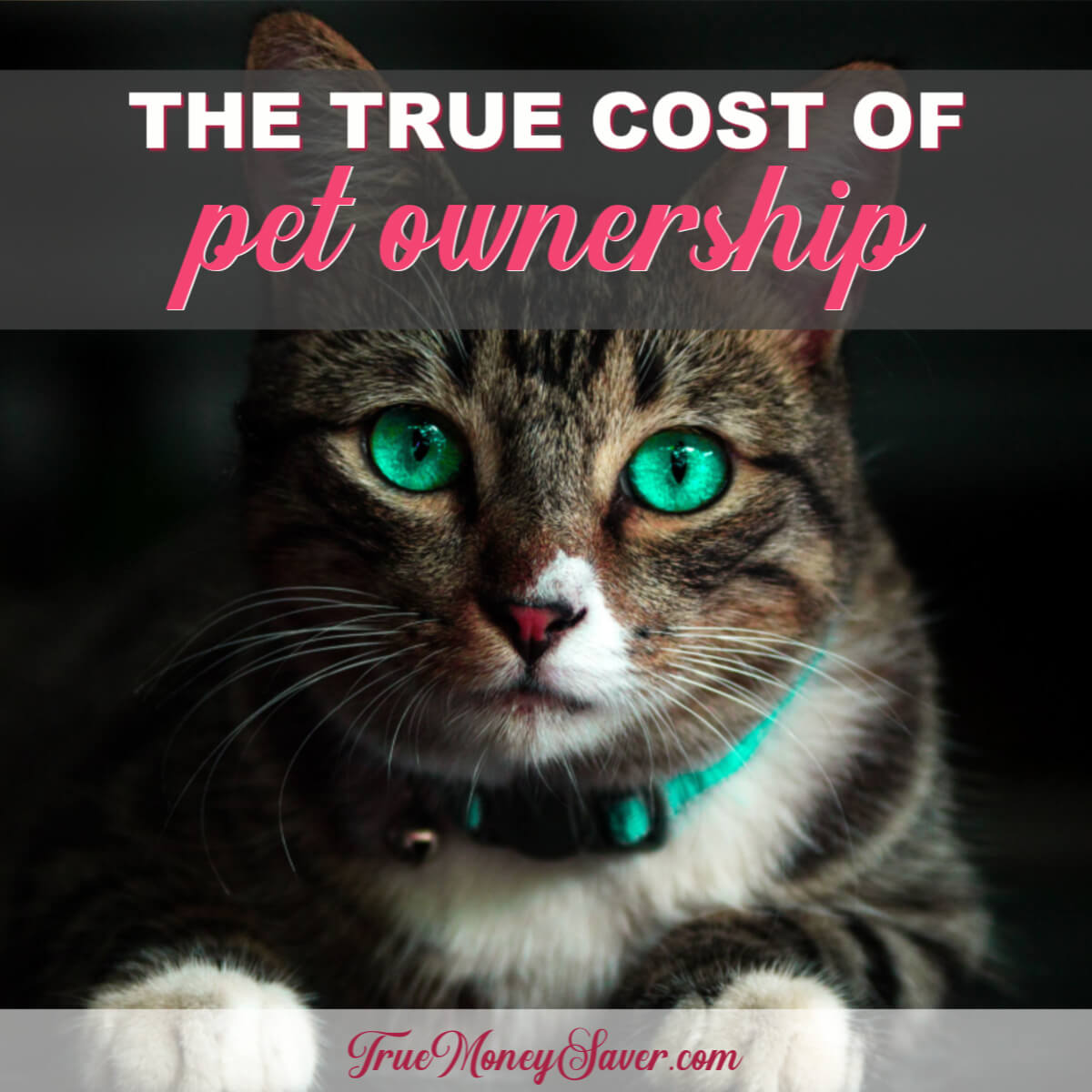 The True Cost Of Owning A Pet