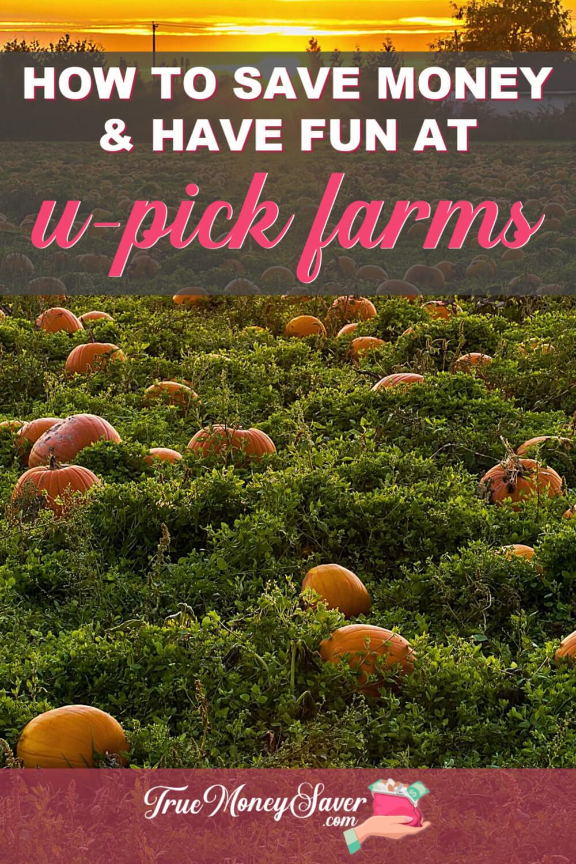 u-pick farms