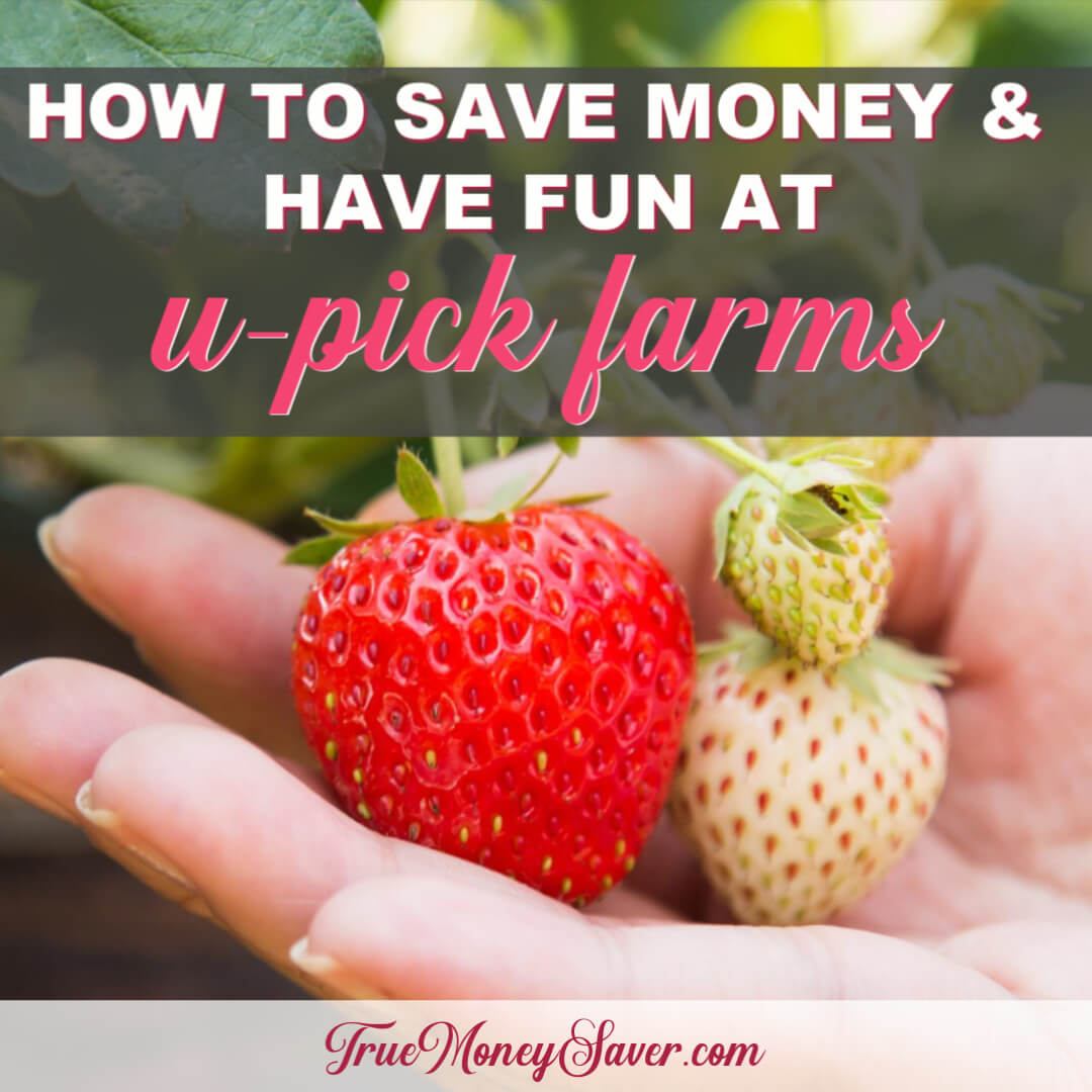 How To Save Money And Have Fun With U-Pick Farms This Year