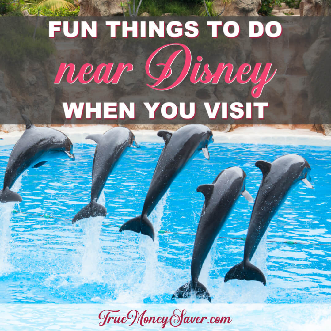 Other Fun Family Things To Do Near Disney When You Visit